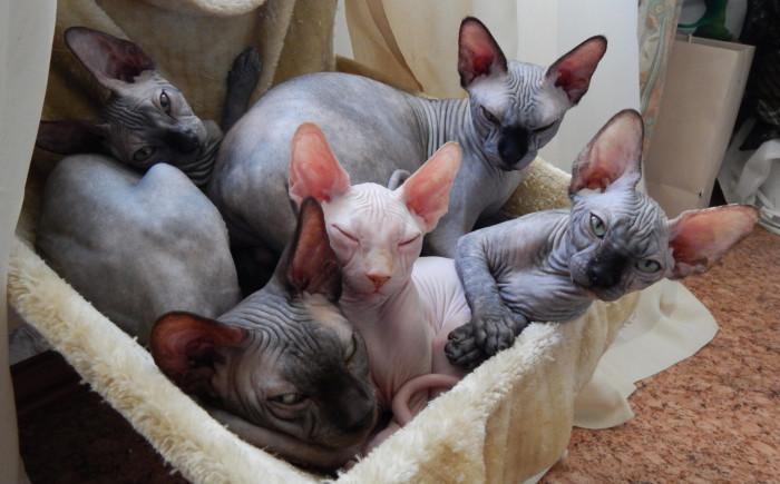 Товары для кошек в Одессе, цена — интернет-магазин