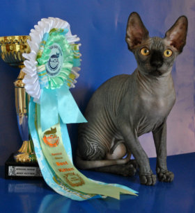 World Cat Olimpia», 26 апреля 2014 г.